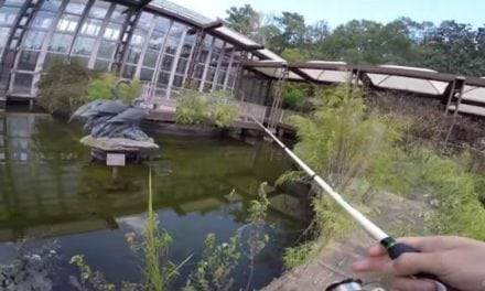 Video: Fishing an Abandoned Building's Old Koi Pond for Largemouths