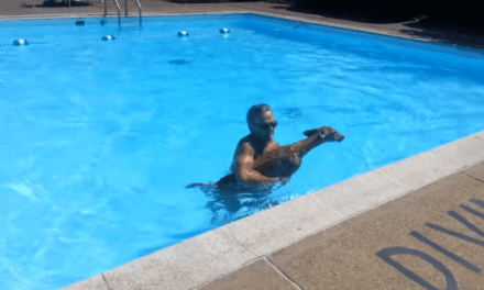 Video: Man Rescues a Fawn from a Pool