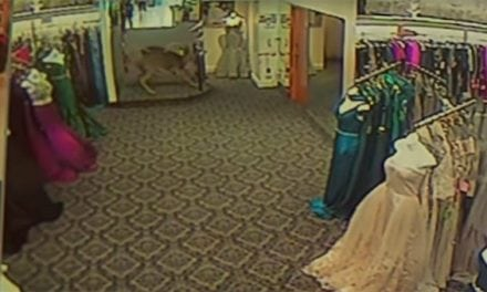 Watch as a Freaked Out Deer Terrorizes a Fashion Store