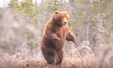 Watch as Jack Brittingham Arrows the Pope & Young World Record Alaska Brown Bear