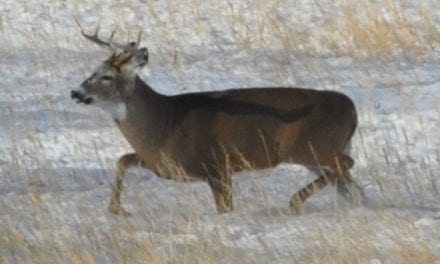 #WhitetailWednesday: 5 Tips for a Less Stressful Deer Hunting Season