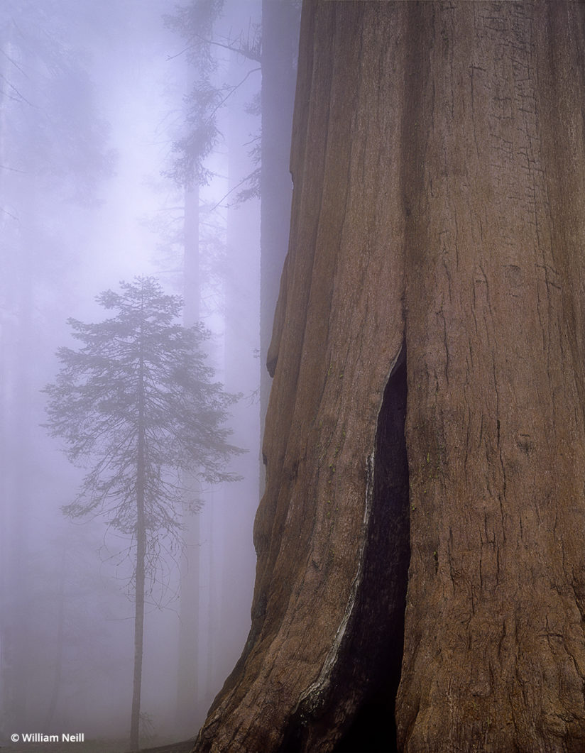 William Neill, Sequoia National Park