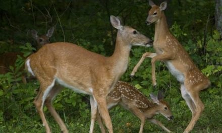 10 Things Deer Are Thinking About