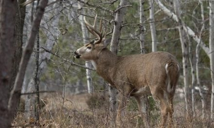 4 States You'd Be Surprised Have Good Deer Hunting
