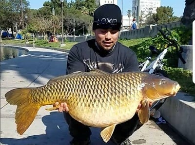 50-Pound Carp In The Middle Of Los Angeles