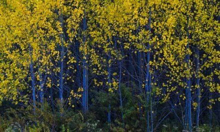 Appalachian Autumn: In Search Of Fall Color In West Virginia