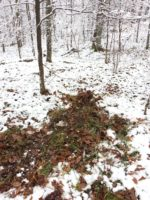 Checking Things Out: Public Land In-Season Scouting Methods