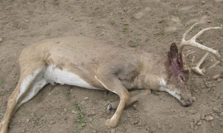 Kansas Game Wardens Looking for Leads on Poached Buck Left to Rot