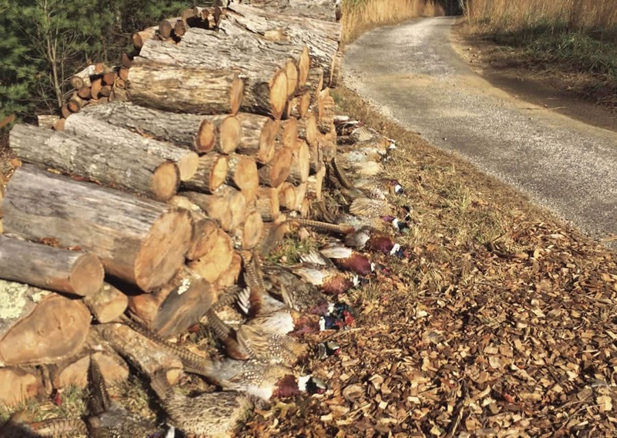 Celebrating Fall with an English Pheasant Hunt