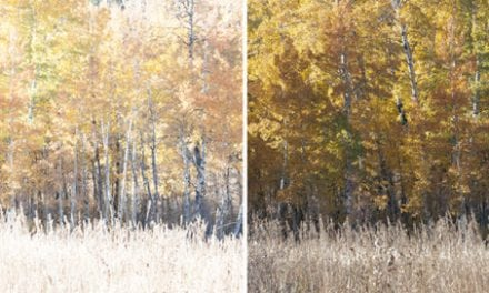 Processing For Neutral Fall Color Photos