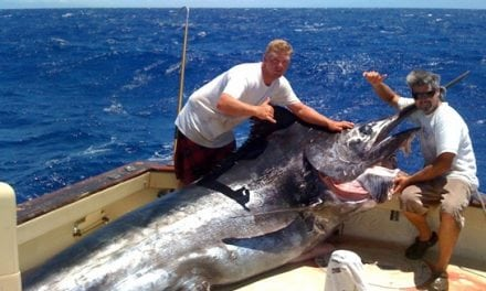 The Grander Blue Marlin: A Young Giant