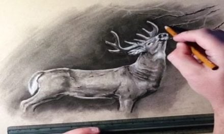 This Artist's Video Drawings of Wildlife are Mesmerizing and Incredible
