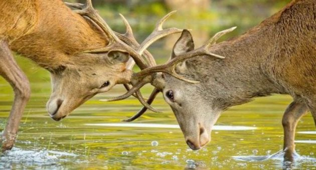 What Do You Think? Can Hunters and Conservationists Coexist?
