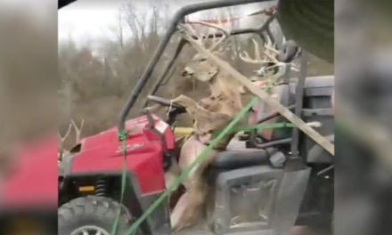 #WhitetailWednesday: Yup…It Might Be Deer Season