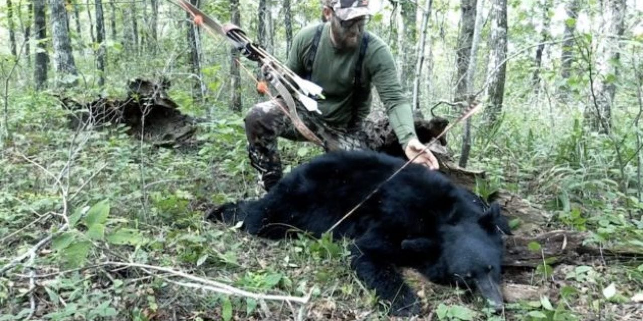 A Public Land Traditional Archery Bear Hunt in Arkansas Is Not for Sissies
