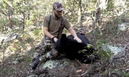 It Takes Skill to Kill a Public-Land Black Bear on Foot with a Recurve Bow