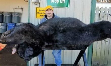 Massive 633-Pound Black Bear Taken in North Carolina
