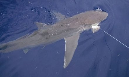 New Requirements for Recreational Shark Fishing