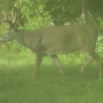 No Mistaking This Monster Buck