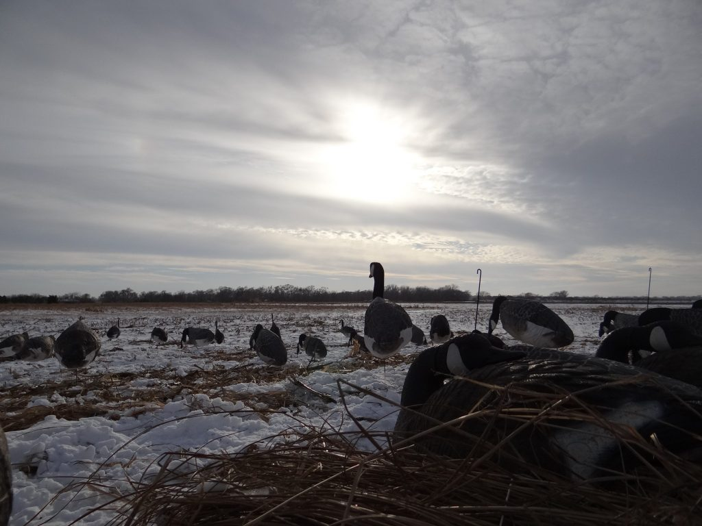 The view from a layout blind during a late-afternoon hunt for Canada geese in a field. Photo by Greg Wagner/Nebraska Game and Parks Commission.