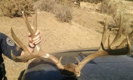 Oregon State Police Looking for Leads in Two Oregon Mule Deer Poaching Cases