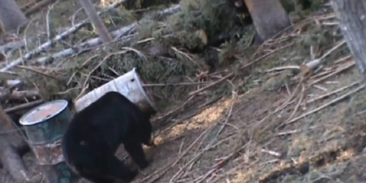 Perfect Archery Shot on Big Black Bear Leads to Eerie Death Moan