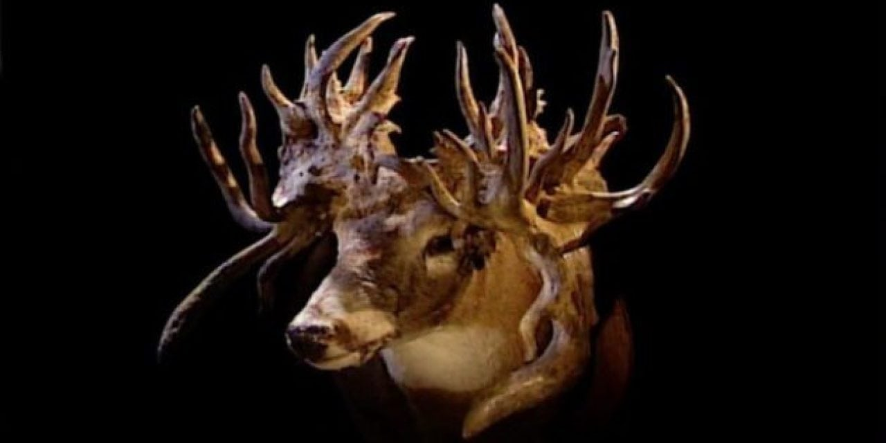 The Louisiana Freak: The Most Bizarre Deer in the World