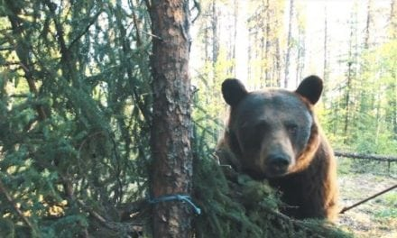 This Guy Was So Close to a Bear That It Touched His Arrow Before He Shot