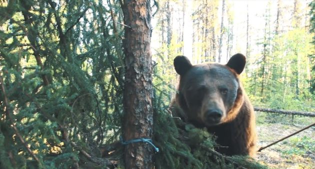 Have You Ever Been So Close To A Bear That You Touched the bear with Your Arrow