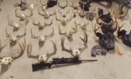 Two More Poaching Suspects Plead Not Guilty in Washington's 'Worst Case Ever'