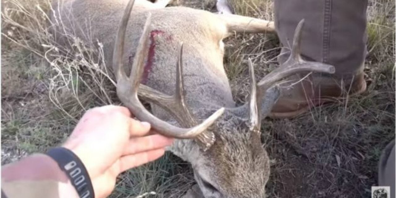 Video: Join Lunkers TV for a Texas Spot-and-Stalk Whitetail Hunt