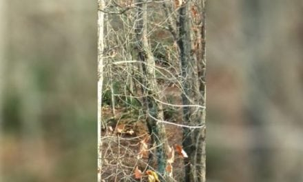 VIDEO: Opening Day Hunt Spoiled By Chainsawing Neighbor
