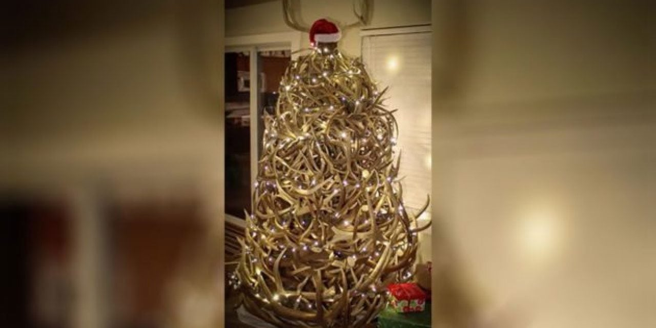 Video: This Awesome Shed Antler Tree Will Get You in the Christmas Spirit
