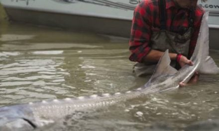 Watch: This Sturgeon Fishing Video Will Make You Want to Pack Your Bags for Canada