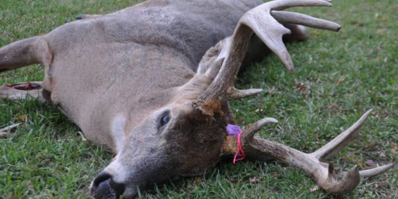 #WhitetailWednesday: I Didn't Shoot a Deer This Year and It's OK