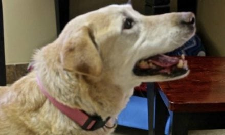 Abandoned Dog Rescued After Retrieving Pheasant for Surprised Hunter