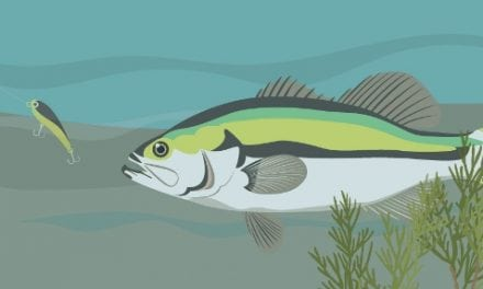 Do Fish See Fishing Line? Decoding Research and Manufacturer Claims