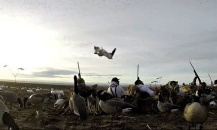 Hunter Takes a Goose to the Face as it Rockets to the Ground