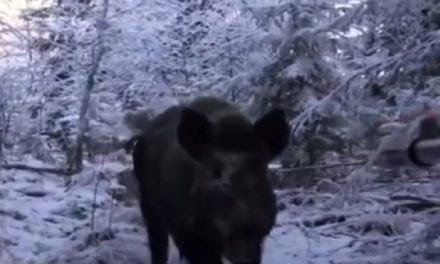 Hunting Wild Boar in Russia Gets Real Personal Quick