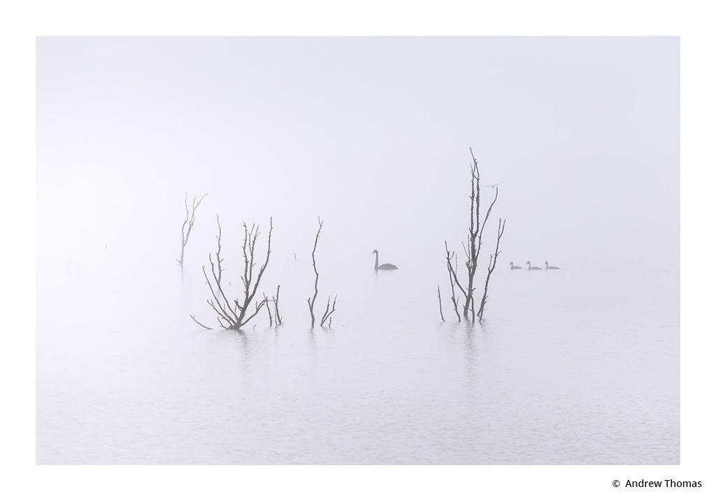 "Today's Photo Of The Day is ""Through the Morning Mist"" by Andrew Thomas. Location: Lake Burrumbeet, Victoria, Australia."