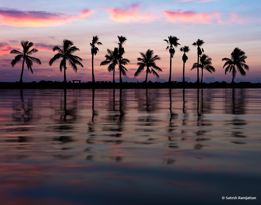 """Today's Photo Of The Day is """"The Usual Suspects"""" by Satesh Ramjattan. Location: Matheson Hammock Park, Coral Gables, Florida."""
