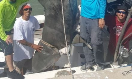Remember When This 1,000-Pound Shark Almost Sank A Boat?