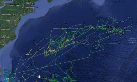 Tagged Tiger Shark Travels 37,000 Miles