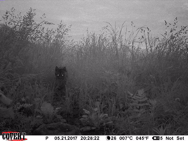 trail cam tuesday