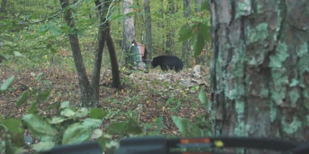 Watch This Boy Take His First Bear on a Hunt with His Dad in Arkansas