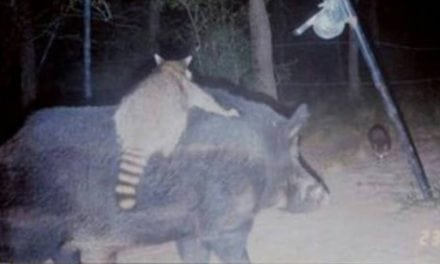 10 Inexplicable Trail Camera Photos