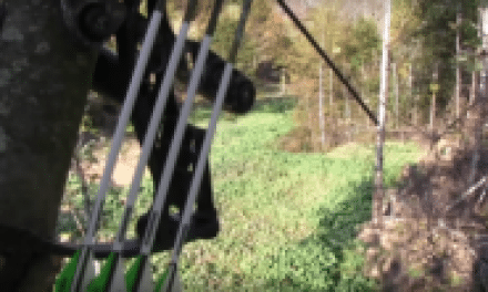 Are Food Plots the Same as Baiting?