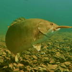 Awesome Underwater Footage of Drop-Shot Fishing for Smallies