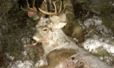 Bowhunting the Ghosts of Public Land