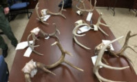 Deer Taxidermist is Scapegoat in Tennessee